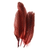 Guinea Fowl Quill 6-9'' Red